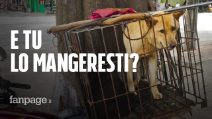 Yulin, cani rapiti per essere mangiati: come funziona il mercato della carne