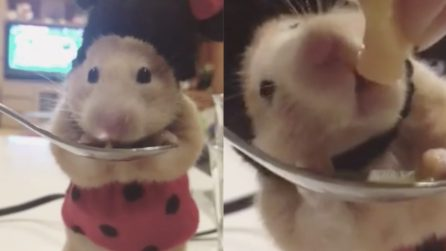 This small hamster dressed as Minnie Mouse eating from the spoon: the adorable video