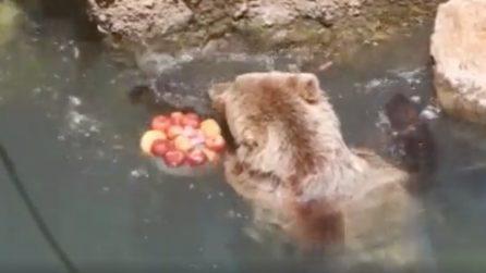 Roma, ondata di super caldo: gli animali del Bioparco si ristorano con la frutta fresca