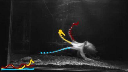 I tentacoli dei polpi prendono decisioni indipendentemente dal cervello centrale