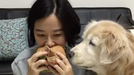 She eats the sandwich near her dog: the reaction very fun