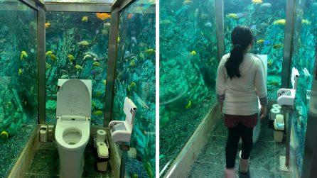 Nel bagno delle donne c'è qualcuno che ti osserva: la toilette più caratteristica al mondo