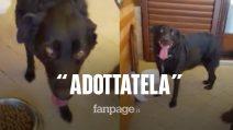 """Zora, la cagnolina che ha vegliato per una settimana la padrona morta: """"Qualcuno l'adotti"""""""