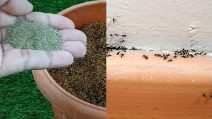 How to keep ants away and protect your plants