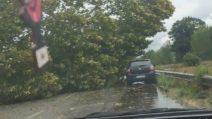 Maltempo Lombardia: forte tromba d'aria sradica gli alberi