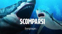 I grandi squali bianchi sono spariti dalle coste del Sudafrica, ecco perchè