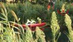 Terracina, cadavere di un uomo in un canale lungo la via Appia: mistero sulla sua identità