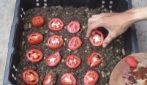 Come coltivare i pomodori in casa: il metodo semplice e veloce