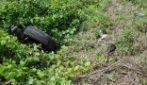 Solopaca, uccide il figlio di 4 mesi e getta il corpo in un dirupo sulla Telesina