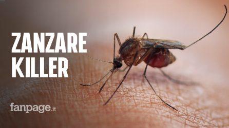 Zanzare killer: tutte le malattie che si possono contrarre con una puntura