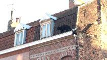 Pantera nera si aggira sul cornicione del palazzo ed entra in casa