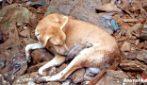 I cuccioli sono intrappolati sotto le macerie, ma il salvataggio della madre è un miracolo d'amore