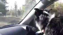 Lascia il lavoro per cercare il suo cane lo trova dopo due mesi