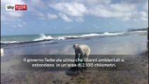 Brasile, enorme chiazza petrolio sulle coste nordorientali
