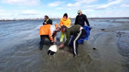 Il salvataggio del piccolo delfino spiaggiato: i soccorritori lo aiutano a riprendere il largo
