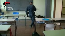 Cinisello, controlli antidroga a scuola: i cani dei carabinieri trovano hashish e marijuana