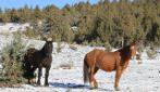 Il cavallo torna dalla sua compagna in tempo per il parto: la bellissima storia Goliath e Red Lady