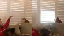 Il ragazzo prova a chiudere la finestra, ma il gatto vuole la luce: la sfida