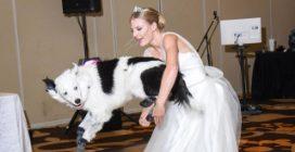Il cane che balla al matrimonio della sua padrona per giurarle eternamente amore e fedeltà