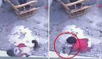 Il gatto domestico avverte il pericolo e salva la vita al bimbo