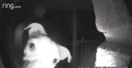 Rimane chiuso fuori casa: le telecamere riprendono ciò che fa
