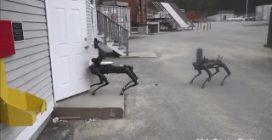 Spot, il cane robot utilizzato dalla polizia