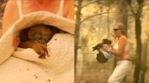 Rischia la vita per salvare il koala dalle fiamme: donna coraggio compie un gesto stupendo