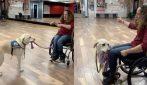 È sulla sedia a rotelle ma non rinuncia alla danza: trova un partner davvero speciale