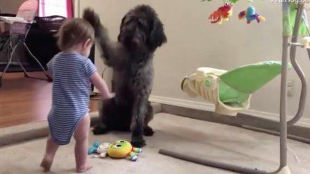 """Il cane """"tiene a bada"""" il suo piccolo e impertinente padroncino"""