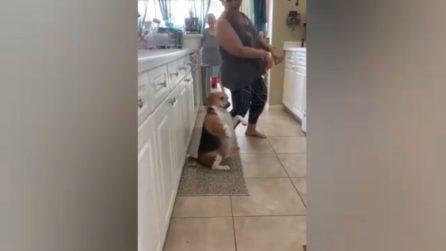 Il cagnolino balla il reggaeton insieme alla padrona, immagini spettacolari