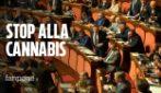 """Casellati stoppa cannabis light, caos in aula. Mantero (M5S): """"Ha ceduto a pressioni Lega?"""""""