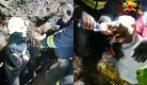 Vigili del fuoco eroi, scavano 30 ore per salvare due cani rimasti intrappolati in una cava
