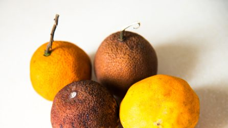 How to keep fresh the citrus fruits