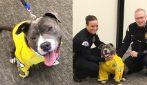 Poliziotto per un giorno: il regalo degli agenti al cane malato terminale