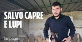 Pietro Orlando, il giovane pastore calabrese che ha inventato il collare anti-lupi