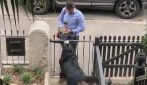 Il cane aspetta il padrone rientri a casa: quando lo vede, inizia la festa