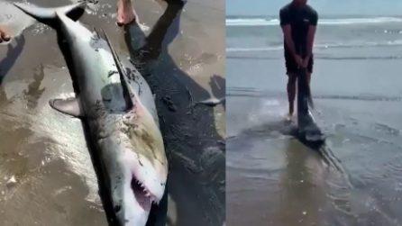 Lo squalo sembra ormai senza vita: l'uomo lo trascina in acqua e lo salva