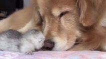 Un momento di pura tenerezza: amici sin da subito