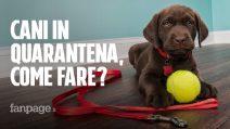 Cani e Coronavirus: come comportarsi con gli amici a quattro zampe