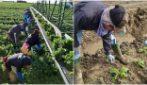 """Il coraggio degli agricoltori nella lotta al Coronavirus: """"Se non lavoriamo, il paese non mangia"""""""