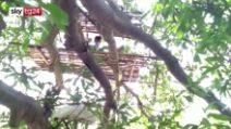 India : senzatetto in autoisolamento sugli alberi