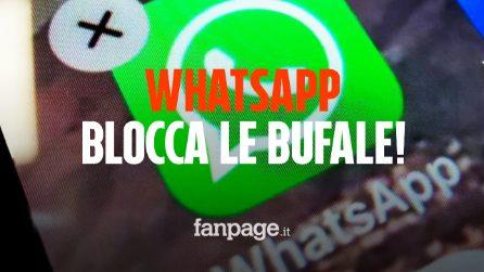 WhatsApp, stop a fake news e catene: i messaggi potranno essere inoltrati una sola volta