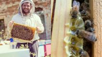 Italy's sweetest honey: Giorgio Poeta, the beekeeper who treats bees with love