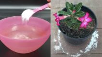 How to use baking soda for your plants