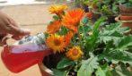 Come utilizzare la cipolla in giardino: rimedi semplici ed efficaci