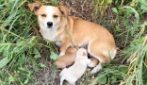 Cagnolina e cuccioli abbandonati in strada: lei resta immobile per giorni in attesa del padrone