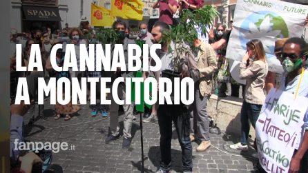 """""""Io coltivo"""", la battaglia per la cannabis: """"Legalizzare è meglio che proibire"""""""