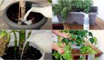 Latte, lievito scaduto, bicarbonato e bucce di patate: come usarli in giardinaggio!