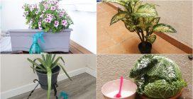 Ecco come utilizzare il bicarbonato per mantenere le tue piante in salute tutto l'anno!