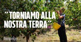 """In Sicilia i piccoli produttori di frutta bio sfidano la grande distribuzione: """"Davide contro Golia"""""""